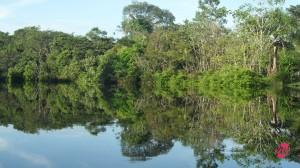 Scorcio di Foresta Amazzonica