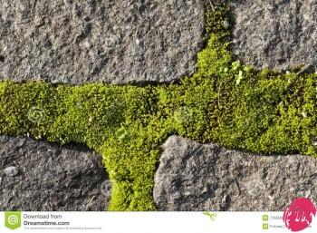 http://www.dreamstime.com/royalty-free-stock-images-moss-growing-cobble-stones-image7156509