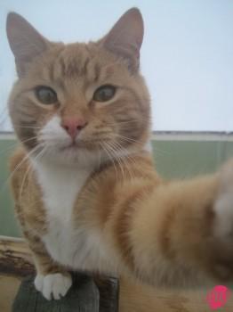 cat-selfie-3
