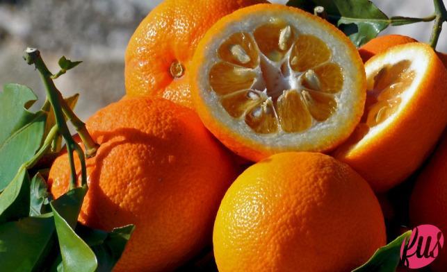 arance-amare_0112
