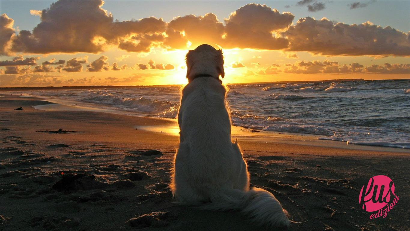 dog-sunset-wallpaper