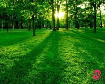 parco_verde_con_sole