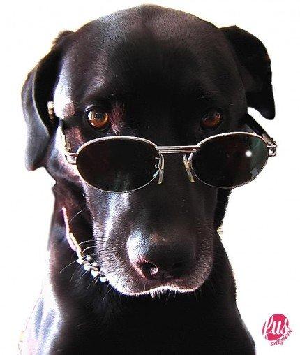 cani-senza-vista-main2