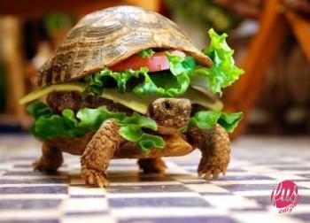 income-magazine-fast-food-vs-slow-food-vezi-aici-detalii-despre-cea-mai-noua-tendinta-gastronomica-168042
