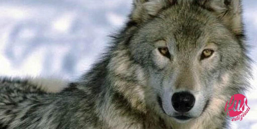 Linsegnamento del lupo u2014 facciunsalto.it