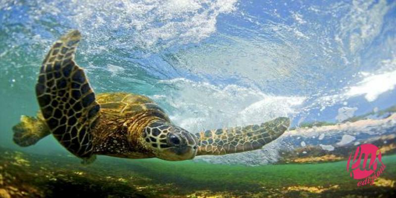 tartaruga-tuffo-oceano-corrente modificata