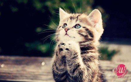 gatto prega