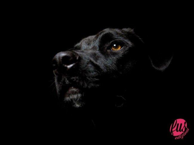 cane-di-notte