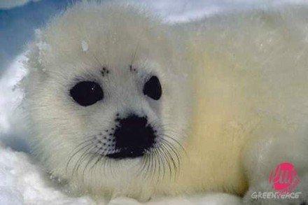 foca-canada