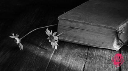 libro-540x300