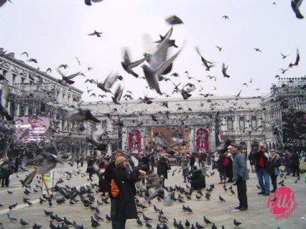 venezia e piccione