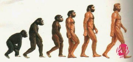 evoluzione-umana