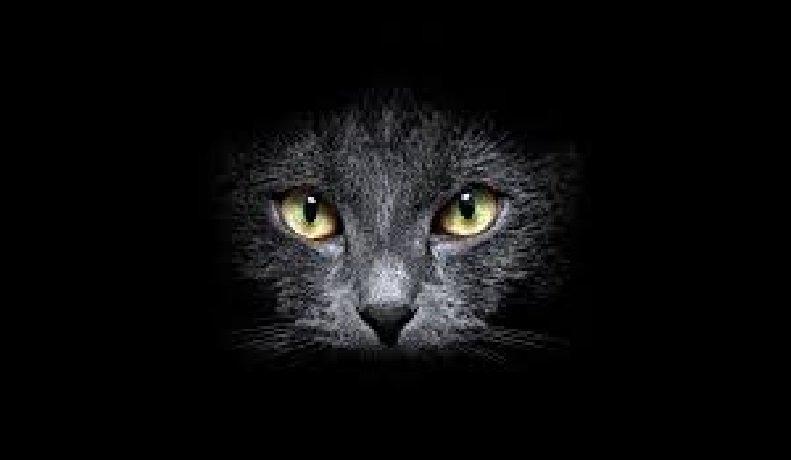 gatto-1