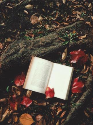 un libro aperto tra radici e fiori rossi