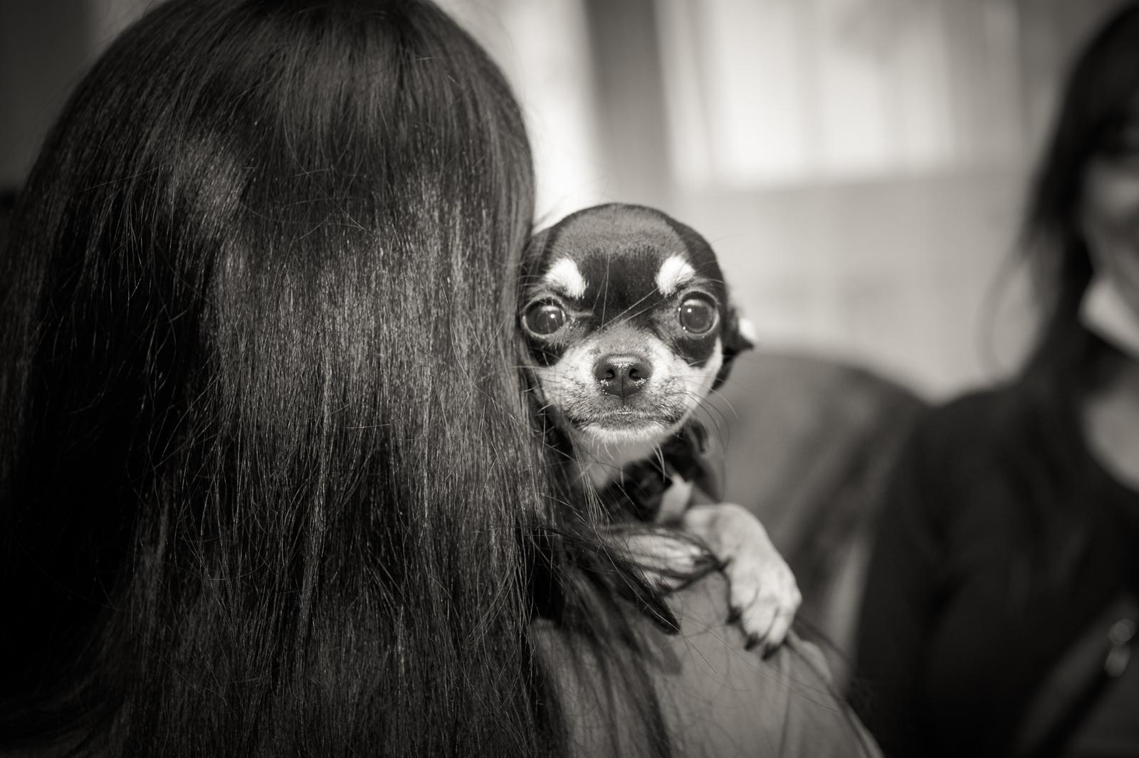 sguardo di un cane