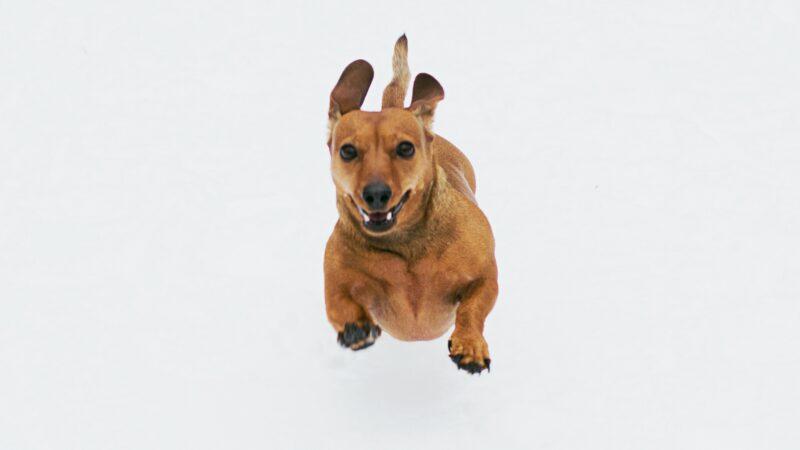 Cane che corre e sembra volare
